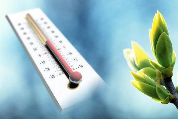 температура для цветов