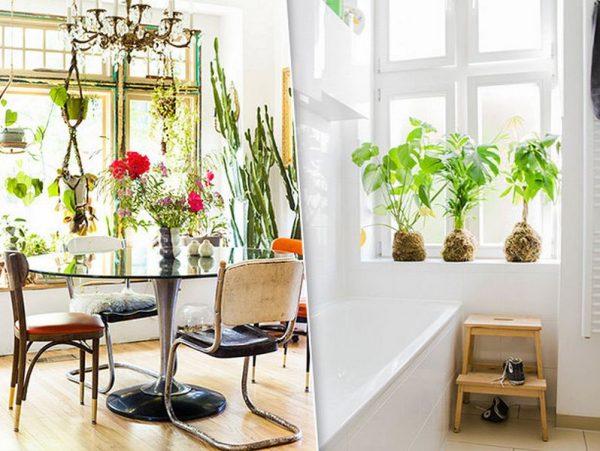 дизайн комнатных цветов