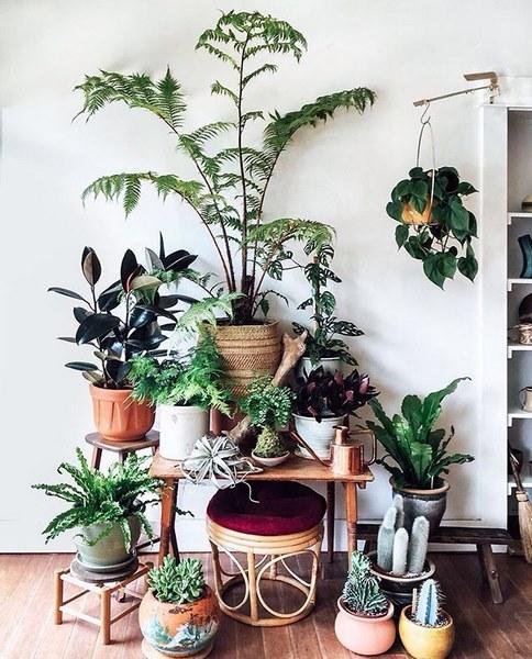 дизайн растений