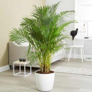 Болезни и вредители пальм